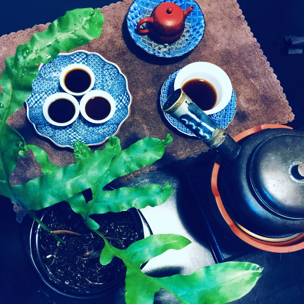 brewing pu erh tea