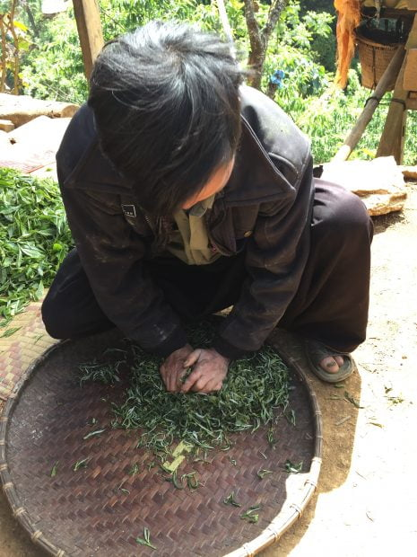 Rolling ancient tea leaves
